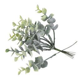 10 jolies branches d'Eucalyptus